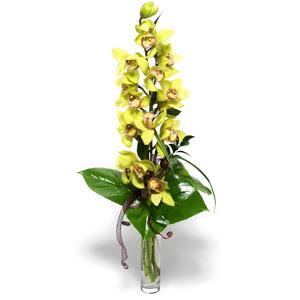 Aydın İnternetten çiçek siparişi  cam vazo içerisinde tek dal canli orkide
