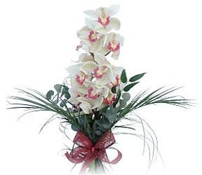 Aydın çiçek siparişi sitesi  Dal orkide ithal iyi kalite