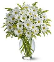 Vazo içerisinde beyaz krizantem çiçekleri  Aydın çiçekçi mağazası