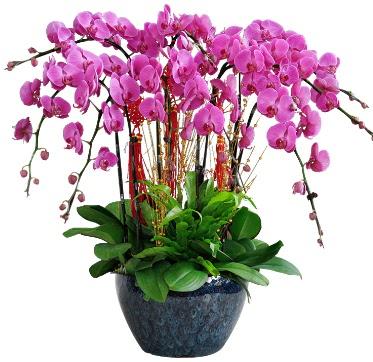 9 dallı mor orkide  Aydın 14 şubat sevgililer günü çiçek