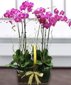 7 dallı mor lila orkide  Aydın çiçek gönderme sitemiz güvenlidir