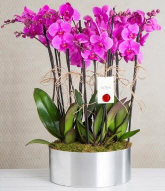 11 dallı mor orkide metal vazoda  Aydın çiçek gönderme sitemiz güvenlidir