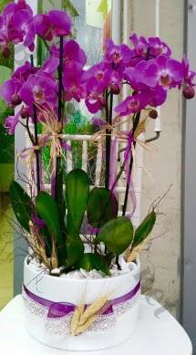 Seramik vazoda 4 dallı mor lila orkide  Aydın online çiçek gönderme sipariş