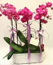 Beyaz seramik içerisinde 4 dallı orkide  Aydın ucuz çiçek gönder
