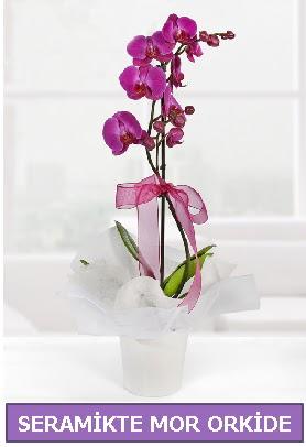 Seramik içerisinde birinci kalite tek dallı mor orkide  Aydın İnternetten çiçek siparişi