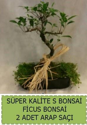 Ficus S Bonsai ve arap saçı  Aydın çiçekçi telefonları