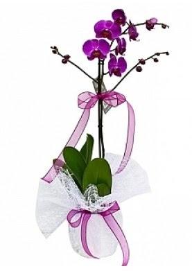 Tekli Mor Orkide  Aydın çiçek yolla