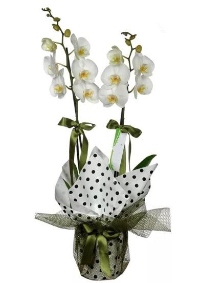 Çift Dallı Beyaz Orkide  Aydın 14 şubat sevgililer günü çiçek
