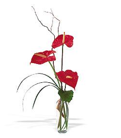 Aydın çiçek siparişi sitesi  cam yada mika Vazoda 3 adet  antoryum