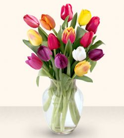 Aydın çiçekçiler  13 adet cam yada mika vazoda laleler