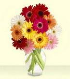 Aydın çiçek yolla , çiçek gönder , çiçekçi   cam yada mika vazoda 15 özel gerbera