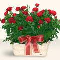 Aydın İnternetten çiçek siparişi  11 adet kirmizi gül sepette