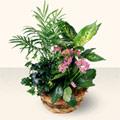 Aydın çiçek satışı  5 adet canli çiçek sepette