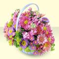 Aydın yurtiçi ve yurtdışı çiçek siparişi  bir sepet dolusu kir çiçegi  Aydın çiçek gönderme sitemiz güvenlidir