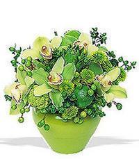 cam yada mika vazoda 5 adet orkide   Aydın online çiçekçi , çiçek siparişi