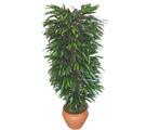 Aydın çiçek siparişi sitesi  Özel Mango 1,75 cm yüksekliginde