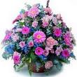 karisik mevsim kir çiçekleri  Aydın çiçek gönderme sitemiz güvenlidir