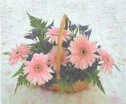 gerbera çiçeklerinde sepet   Aydın çiçek yolla