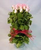 13 adet pembe gül silindirde   Aydın çiçek yolla