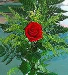 1 adet kirmizi gül buketi   Aydın çiçek siparişi vermek