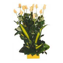 12 adet beyaz gül aranjmani  Aydın kaliteli taze ve ucuz çiçekler