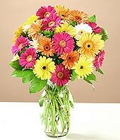 Aydın çiçek online çiçek siparişi  17 adet karisik gerbera