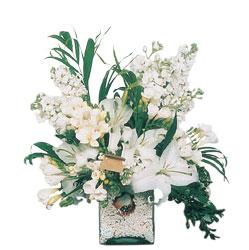 Aydın internetten çiçek siparişi  sadece beyazlardan olusmus mevsim cam yada mika tanzim