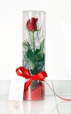 Aydın çiçek yolla  Silindir vazoda tek kirmizi gül