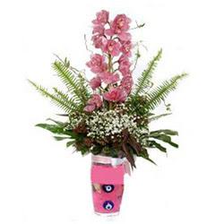Aydın hediye çiçek yolla  cam yada mika vazo içerisinde tek dal orkide çiçegi