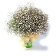 Aydın çiçek mağazası , çiçekçi adresleri  cam yada mika vazo içerisinde cipsofilya demeti