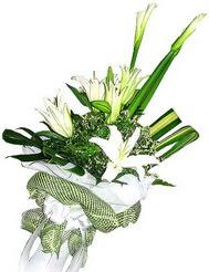 Aydın güvenli kaliteli hızlı çiçek  3 dal kazablanka çiçegi ve yesillikler