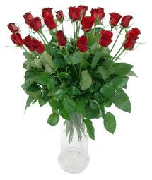 Aydın çiçekçi telefonları  11 adet kimizi gülün ihtisami cam yada mika vazo modeli