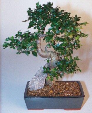 Aydın çiçek gönderme sitemiz güvenlidir  ithal bonsai saksi çiçegi  Aydın çiçek siparişi sitesi