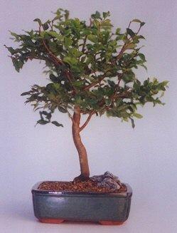 Aydın ucuz çiçek gönder  ithal bonsai saksi çiçegi  Aydın anneler günü çiçek yolla