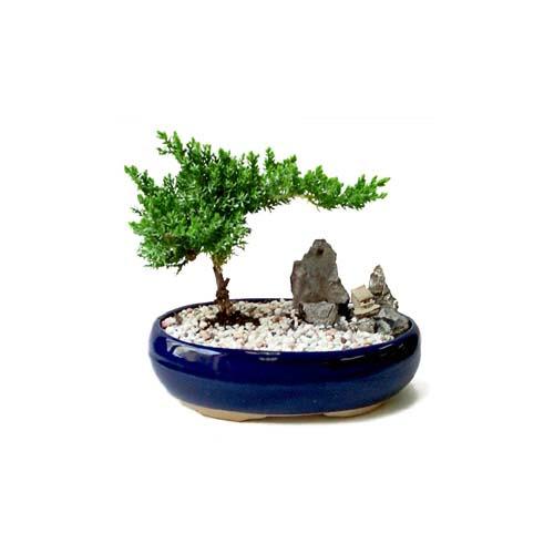 ithal bonsai saksi çiçegi  Aydın çiçek gönderme