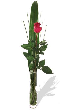 1 adet cam vazo içerisinde kirmizi gül  Aydın çiçek , çiçekçi , çiçekçilik
