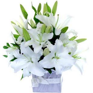 Aydın çiçek yolla  2 dal cazablanca vazo çiçeği