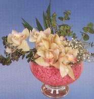Aydın çiçek mağazası , çiçekçi adresleri  Dal orkide kalite bir hediye
