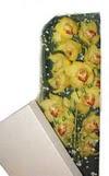 Aydın çiçek gönderme  Kutu içerisine dal cymbidium orkide