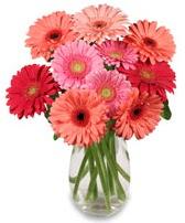vazo içerisinde 13 adet gerbera çiçeği  Aydın çiçek siparişi sitesi