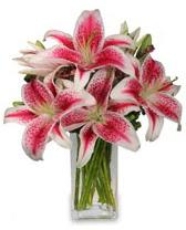 Vazo içerisinde 5 dal kazablanka çiçeği  Aydın cicekciler , cicek siparisi