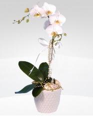 1 dallı orkide saksı çiçeği  Aydın online çiçekçi , çiçek siparişi