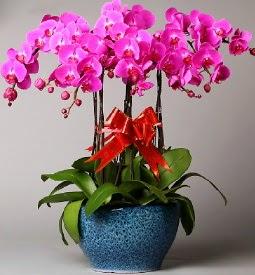 7 dallı mor orkide  Aydın çiçek online çiçek siparişi