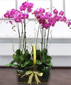 4 dallı mor orkide  Aydın güvenli kaliteli hızlı çiçek