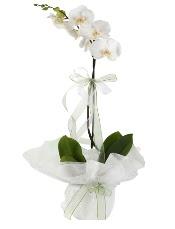 1 dal beyaz orkide çiçeği  Aydın çiçek siparişi vermek