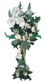 Aydın çiçek mağazası , çiçekçi adresleri  antoryumlarin büyüsü özel