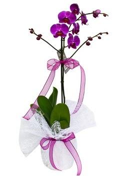 Tek dallı mor orkide  Aydın çiçekçi telefonları