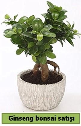Ginseng bonsai japon ağacı satışı  Aydın çiçekçi telefonları