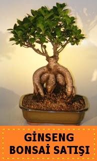 Ginseng bonsai satışı japon ağacı  Aydın cicek , cicekci