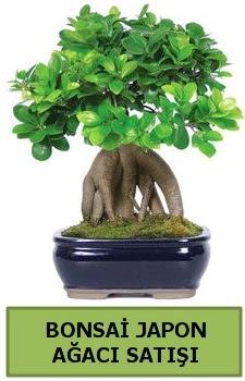 Bonsai japon ağacı satışı  Aydın çiçek satışı